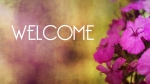 Pink Flowers: Welcome