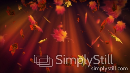 Fall Leaves Worship Background
