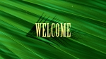 Palm: Welcome
